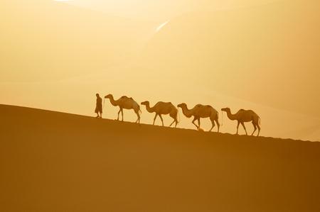 iluminado a contraluz: camello, camello y camellero al atardecer Foto de archivo