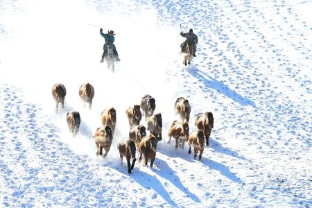 horse racing, horse race on the snow, china