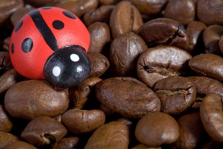coffeebeans: Coffeebeans with a ladybird. Close-Up. Good luck!
