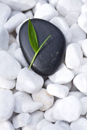 Small green bamboo leaf on a neat, black Zen-Stone. Lying on many white pebbles.