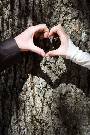 Couples hands forming heart shape with tree trunk in background. Stock Photo
