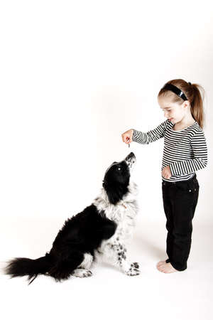 obedient: young girl rewards border collie dog