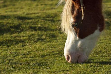Wild pony_4 Stock Photo