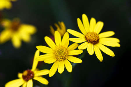 Daisies on a summers day Stock Photo