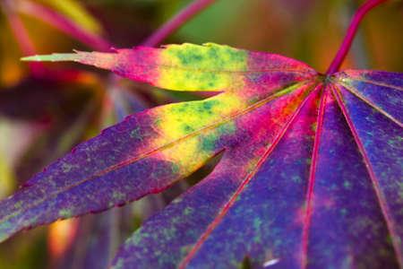 Multi coloured autumn leaves Stock Photo