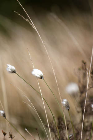 Long brown grass blowing in the wind Stock Photo