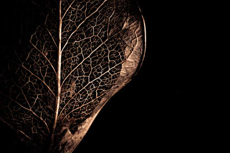 The beauty of nature shown within an old leaf. Stock Photo