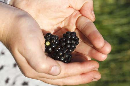 Child holding wild blackberries photo
