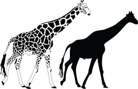 giraffe silhouette: giraffe silhouette