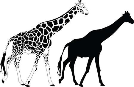 animal leg: silueta de jirafa