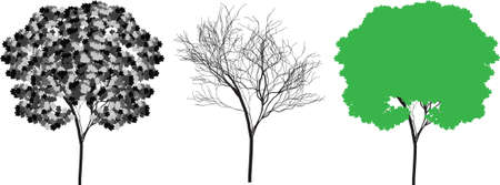 tree silhouette vector Vector