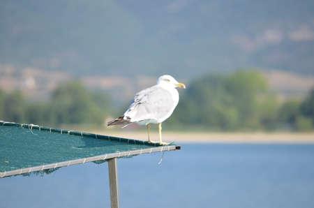 seagull Stock Photo - 14937382