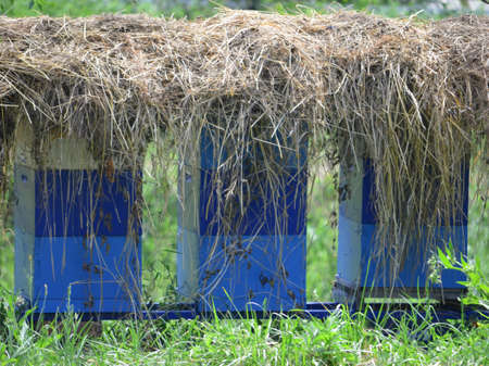 alergy: Beehives under the hay Stock Photo