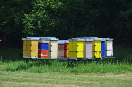 alergy: Beehives