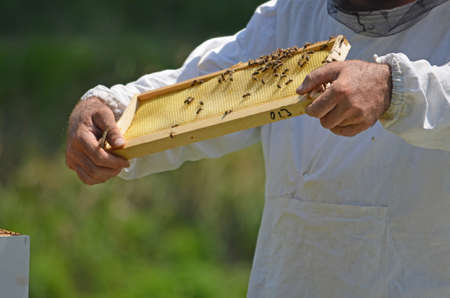 cluster house: Beekeeper with honey comb Stock Photo