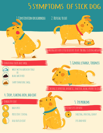 diarrhoea: Vector infographics in bright colors and flat line style - dog care and health - design template for prints and veterinary clinic websites