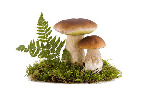 Two fresh porcini mushrooms in a green moss isolated on white background