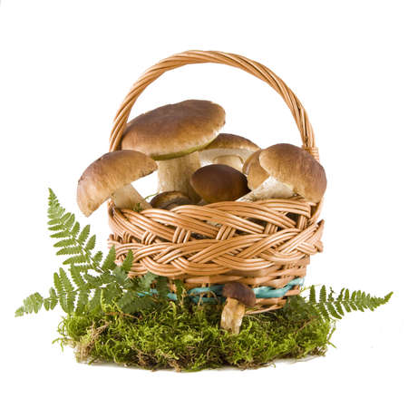 Boletus mushrooms in a wicker basket on green moss isolated on white background