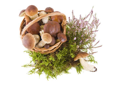 Boletus mushrooms in a wicker basket on green moss isolated on white, top view photo