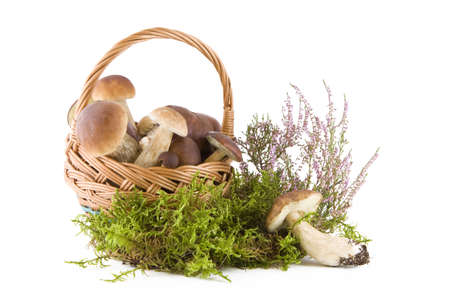 Boletus mushrooms in a wicker basket on green moss isolated on white photo