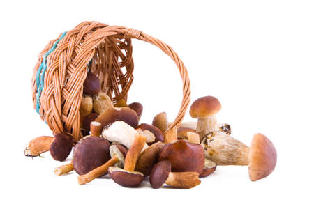Boletus mushrooms with a wicker basket isolated Imagens