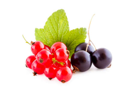 Black and red currants isolated on white, bunch of fresh fruits