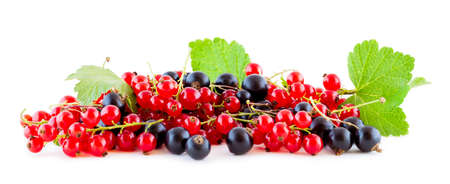 Red and black currants isolated on white panoramic