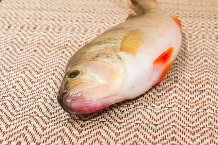 mouth cloth: Freshly caught fish perch on straw napkin. Stock Photo