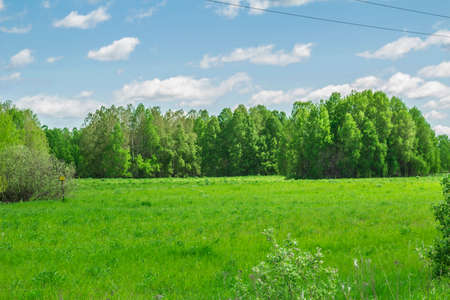midst: Summer landscape in the midst of the Siberian summer