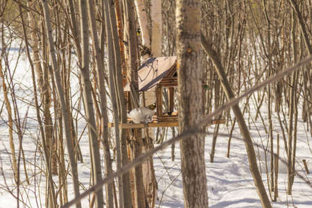 temperament: Woman in autumn winter forest skiing day