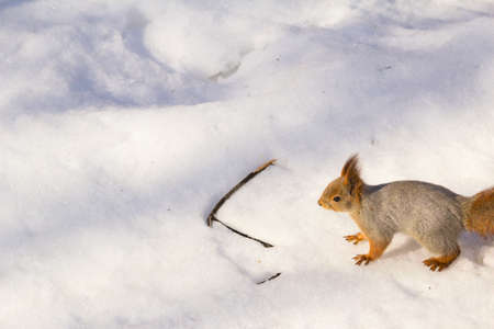unexpected: An unexpected encounter with a squirrel in a forest.