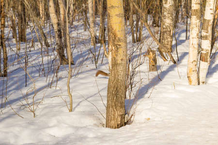 encounter: An unexpected encounter with a squirrel in a forest.