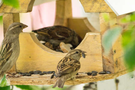 arrived: Sparrows arrived Stock Photo
