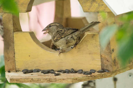 Sparrows arrived photo