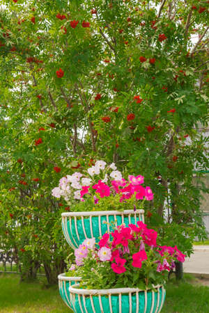 flowerbed: Flowers of different colors and flowers growing in the flowerbed Stock Photo