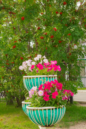 massif de fleurs: Flowers of different colors and flowers growing in the flowerbed Banque d'images