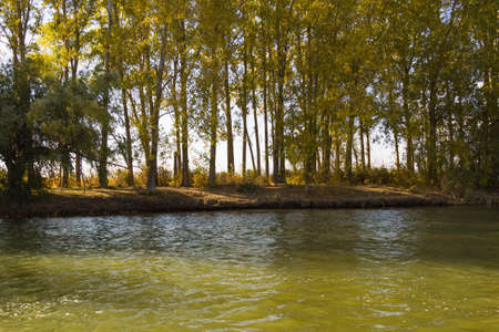riverside tree: The delta of the Volga River, through the eyes of a tourist