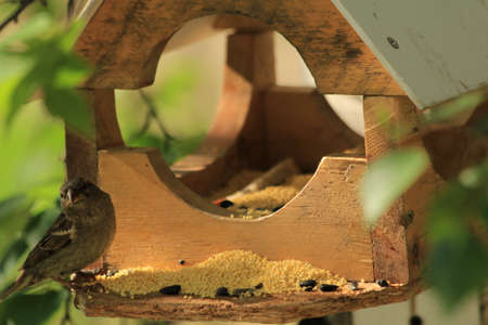 peck: House for feeding birds, mounted on a high tree  Birds fly up to the feeder and peck millet and sunflower seeds