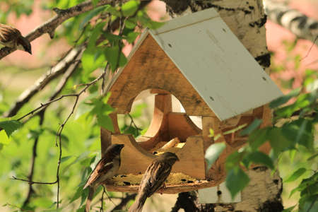 House for feeding birds, mounted on a high tree  Birds fly up to the feeder and peck millet and sunflower seeds