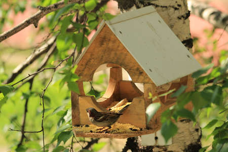 threshold: House for feeding birds, mounted on a high tree  Birds fly up to the feeder and peck millet and sunflower seeds