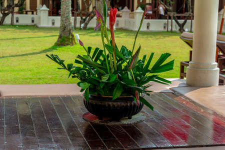 chang: Exotic flowers and plants growing on Koh Chang, give a special charm of local color Stock Photo