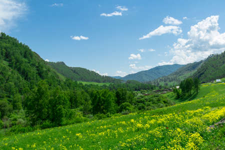 altai mountains: Flower meadows at the foot of the Altai Mountains