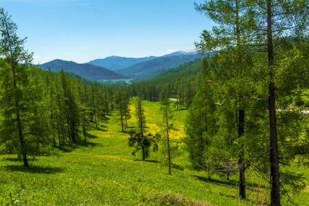 altai mountains: Natural landscape of the Altai Mountains in early summer