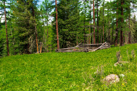 Natural landscape of the Altai Mountains in early summer
