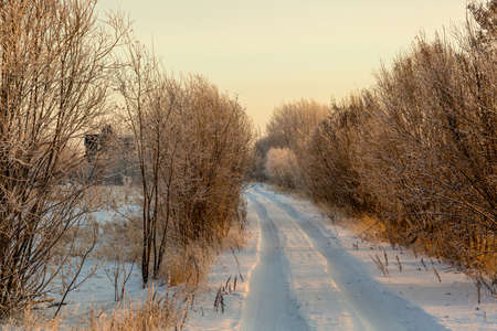 The road in the snow track leads to a lonely house in a snowy, shallow forest