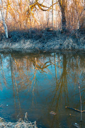 Dawn on the shore of a small river flowing in shallow wood Imagens