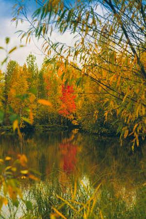 El lago del bosque cubierto de hierba, pequeños bosques caducifolios y arbustos en colores otoñales amarillo-rojo Foto de archivo