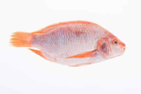 fish, red mojarra or red tilapia on white background.