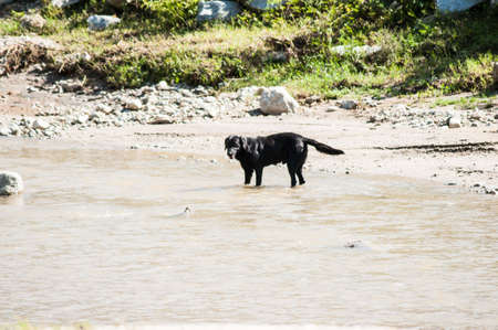 Dog playing in the river water.