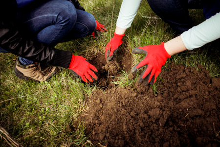 People plant trees in the ground Stock Photo